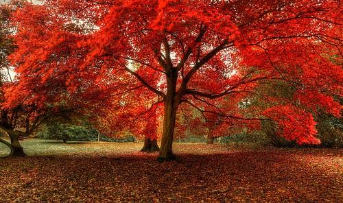 [تصویر:  Photo-Skin_ir-Autumn45.jpg]