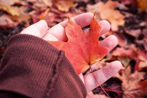 http://avazak.ir/gallery/albums/userpics/10001/hoto-Skin_ir-Autumn-New9.jpg
