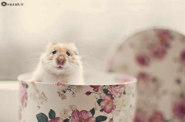 عکس موش جالب