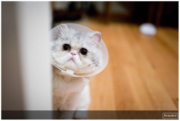 [تصویر:  normal_Avazak_ir-Cat12.jpg]