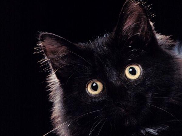 [تصویر:  normal_Avazak_ir-Cat7.JPG]