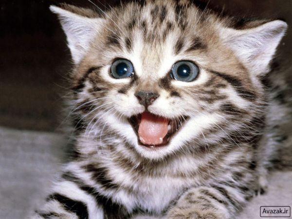 [تصویر:  normal_Avazak_ir-Cat9.jpg]