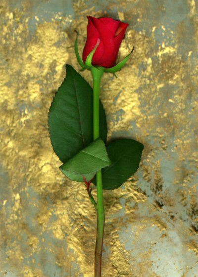 عکس طبیعت گل
