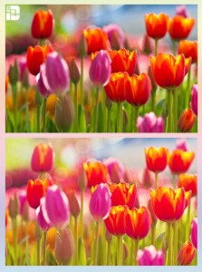 Soft-red-Pop-Actions-For-Photoshop