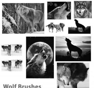 Wolf-Brushes