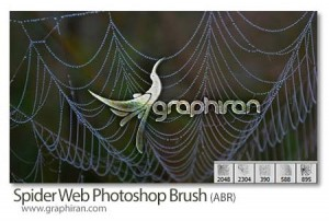 spier-web-brush